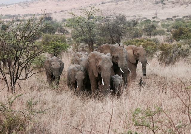 Troupe l'éléphants